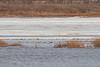 Ducks along the sandbar.