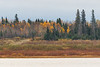Some colour in the trees across the Moose River from Moosonee 2016 October 19th.
