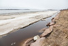 Moose River shoreline looking up river. 2016 May 4th.