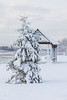 Snow covered tree in front of shelter.