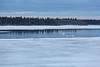 Ducks in surface water on the ice of the Moose River 2016 May 2nd.