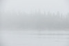 Butler Island trees on a foggy morning from Moosonee.
