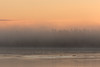 Fog along the Moose River at sunrise.