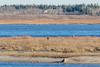Looking across the sandbar to Moose Factory Island on a warm November 6th 2016.