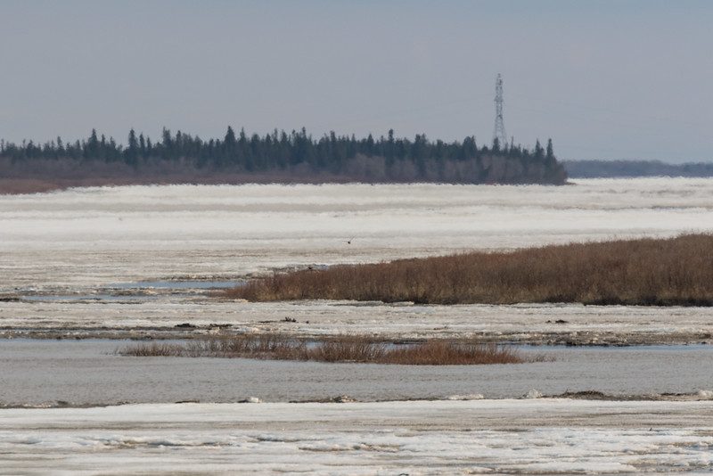 Looking up the Moose River from Moosonee. Heat waves distort distant objects.