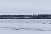 Overcast morning. Loooking across the Moose River towards Moose Factory. Sandbar in foreground.