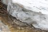 Edge of a piece of ice along the Moose River shoreline