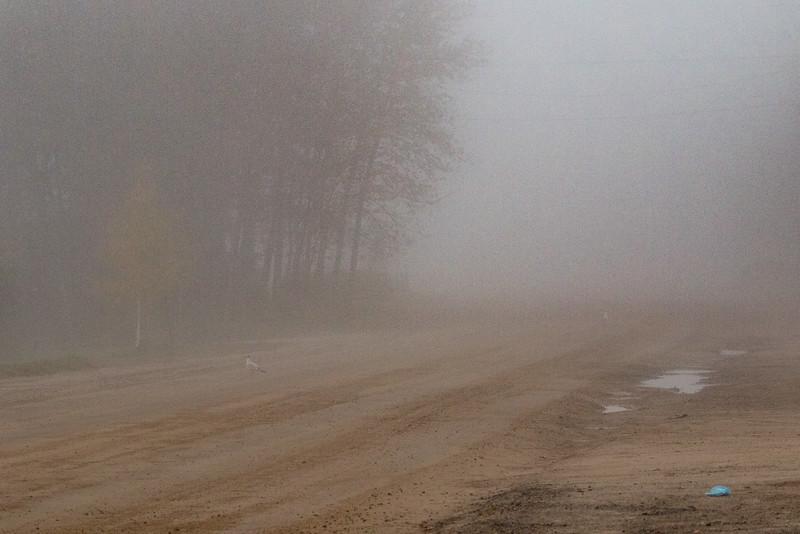 Revillon Road in Moosonee on a foggy morning. Lightroom dehaze 75.