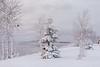 Snow coated trees along Revillon Road.