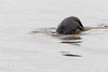 Back end of diving otter.