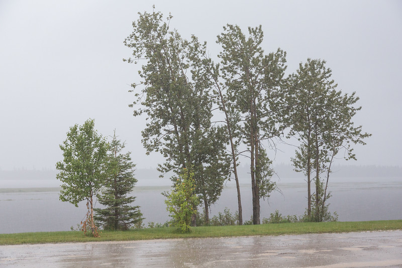Trees along the Moose River in heavy rain.