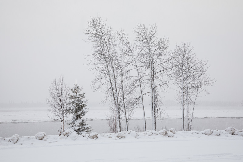 Trees along the Moose River in Moosonee. 2016 December 7th
