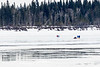 Snowmbile taxi and pedestrians on the Moose River.