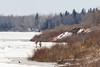 People walking on the Moose River 2017 April 22nd. Crow in foreground on ice.