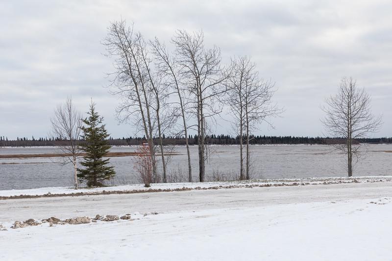 Trees along the Moose River 2017 November 6th