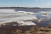 Massive sheet of shore ice moves down the river.
