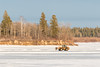 Loader on the Moose River by south end of Butler Island 2017 March 27th.