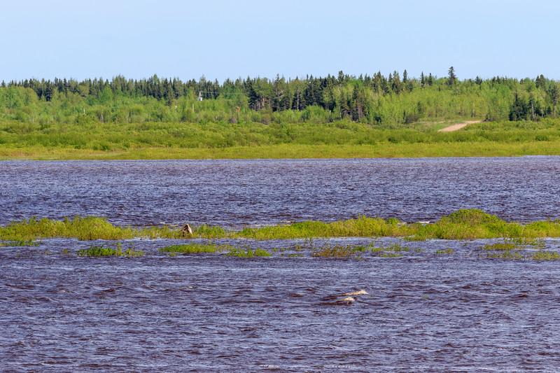High tide, not much sandbar left on the Moose River.