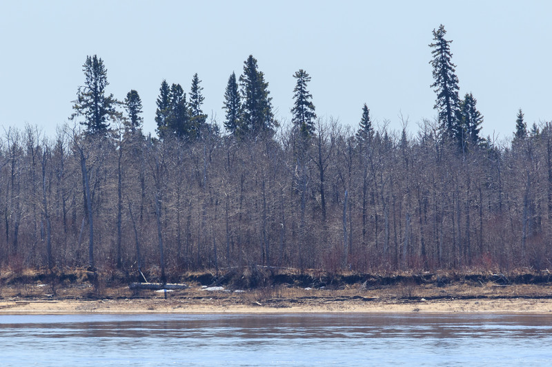 A little ice across the river 2017 May 20th.