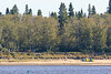 Canoeists on Charles Island at Tidewater Park 2017 September 10th.
