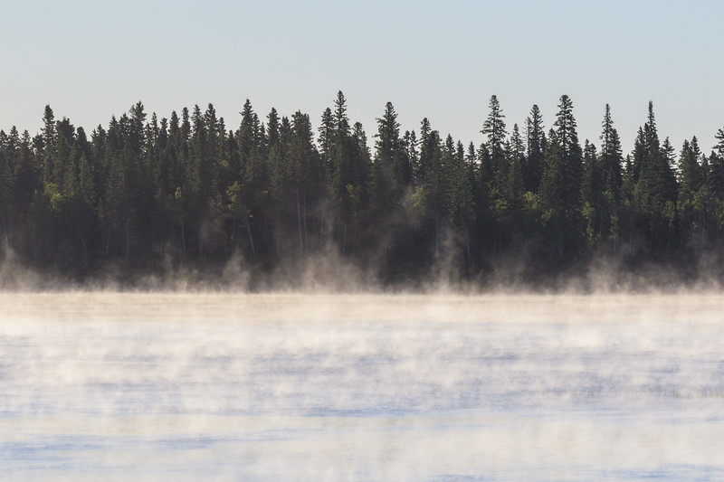 Fog drifting in front of the trees on Butler Island on a cold July morning (1c).