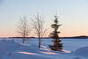 Trees along the Moose River after sunrise. Truck on the river.