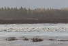 Ice flowing on the Moose River.