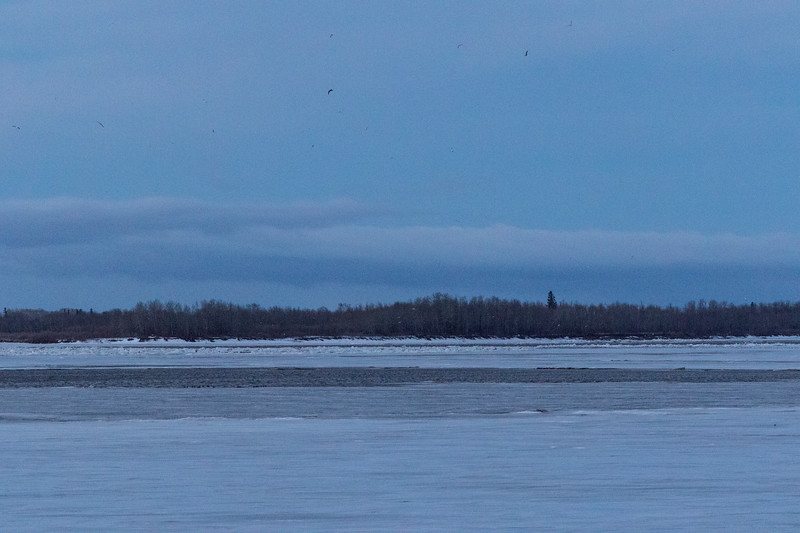 Ice piled up on the edge of a new channel looking up the river 545 am 2017 April 28th.