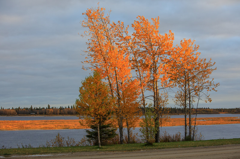 Bright colours along the Moose River in early evening. 2017 October 15th.