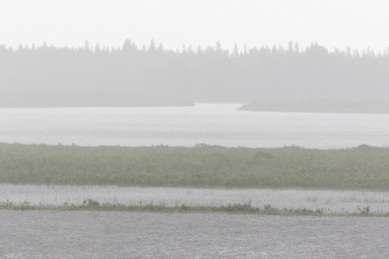 Looking across the Moose River in the rain on 2017 July 8th.