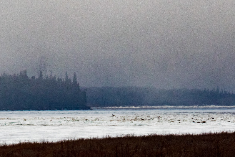Looking up the Moose River from Moosonee 2017 April 27th 323 pm. Ice piling up on the sheet ice. Lightroom dehaze 75 applied.