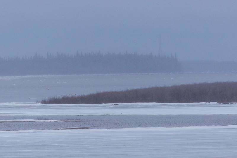 View up the Moose River towards hydro tower at high tide.