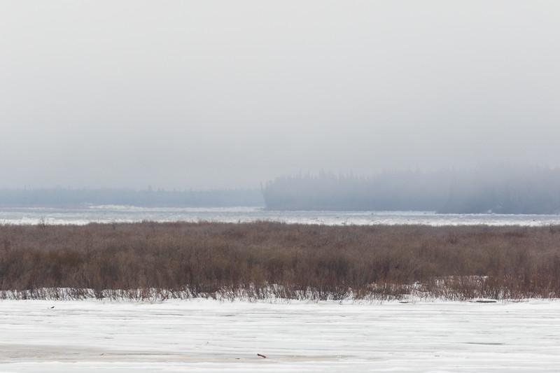 Looking up the Moose River closer to the north shore from Moosonee 2017 April 27th 323 pm. Ice piling up on the sheet ice.