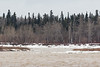 View across the Moose River 2017 May 2nd 1:50 pm