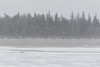 Snow falling on the Moose River at Moosonee 2017 April 29th.