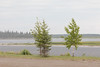 Trees along the Moose River in Moosonee in an afternoon shower.