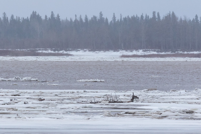 Looking across the Moose River. Ice and debris on sandbar, open water then ice on the far shore.