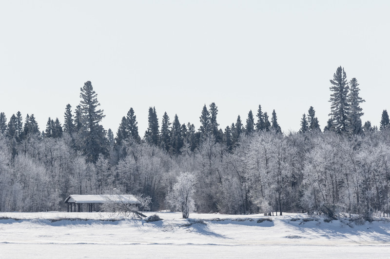 Tidewater Park on Charles Island with frosted trees.