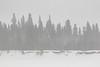 Butler Island trees on a snowy morning. Lightroom dehaze 40 applied.