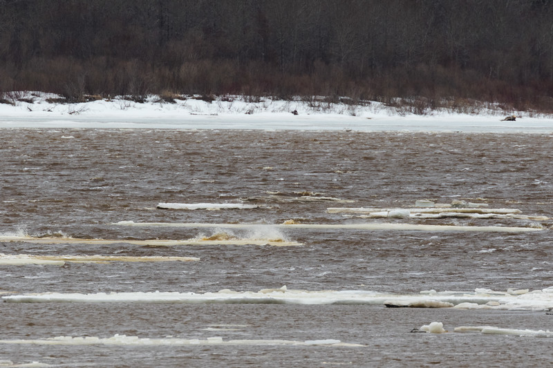 Stranded ice on the Moose River.