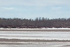 Looking up the Moose River from Moosonee 930 am 2017 April 28th.