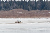 Truck running into a little water on its way across the Moose River ice.