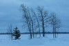 Trees along the Moose River on a snowy morning 2017 January 11th in Moosonee.