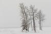 Trees along the Moose River in Moosonee in light fluffy snow.