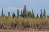 New leaves on trees across the river. Antenna mast in Moose Factory visible between trees.