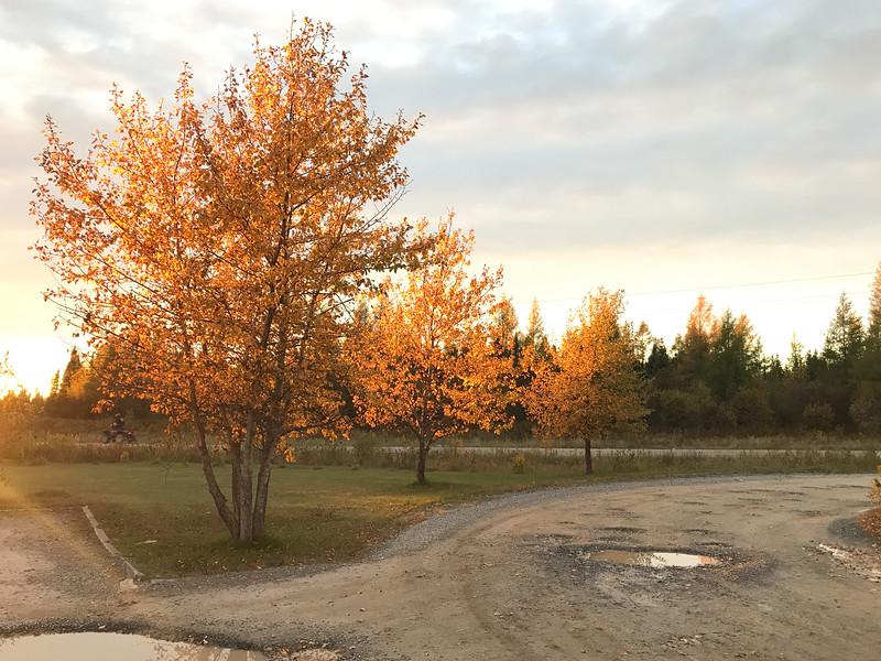 Trees around sunset at Moosonee Health Centre