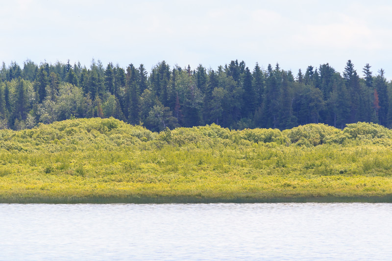 moose Factory Island. Intense grees of early summer.