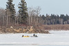 Snowmobile and sled heading across the Moose River at Moosonee