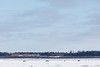 Traffic on the Moose River between Moosonee and Moose Factory Island 2017 February 5th.
