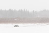 Truck driving on the Moose River to Moose Factory from Moosonee seen in front of Butler Island in light fallling snow.